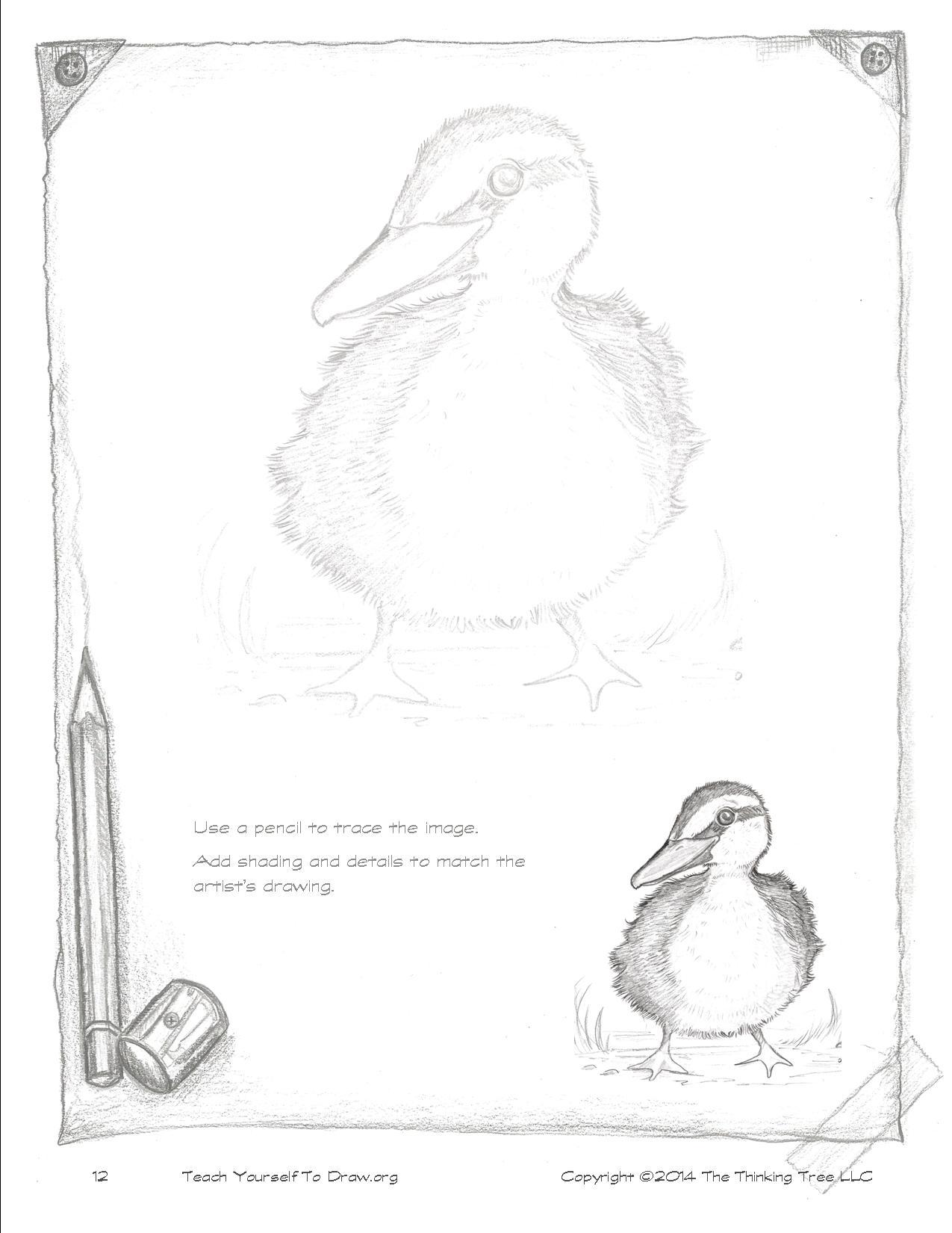 Draw Birds page 12.jpg