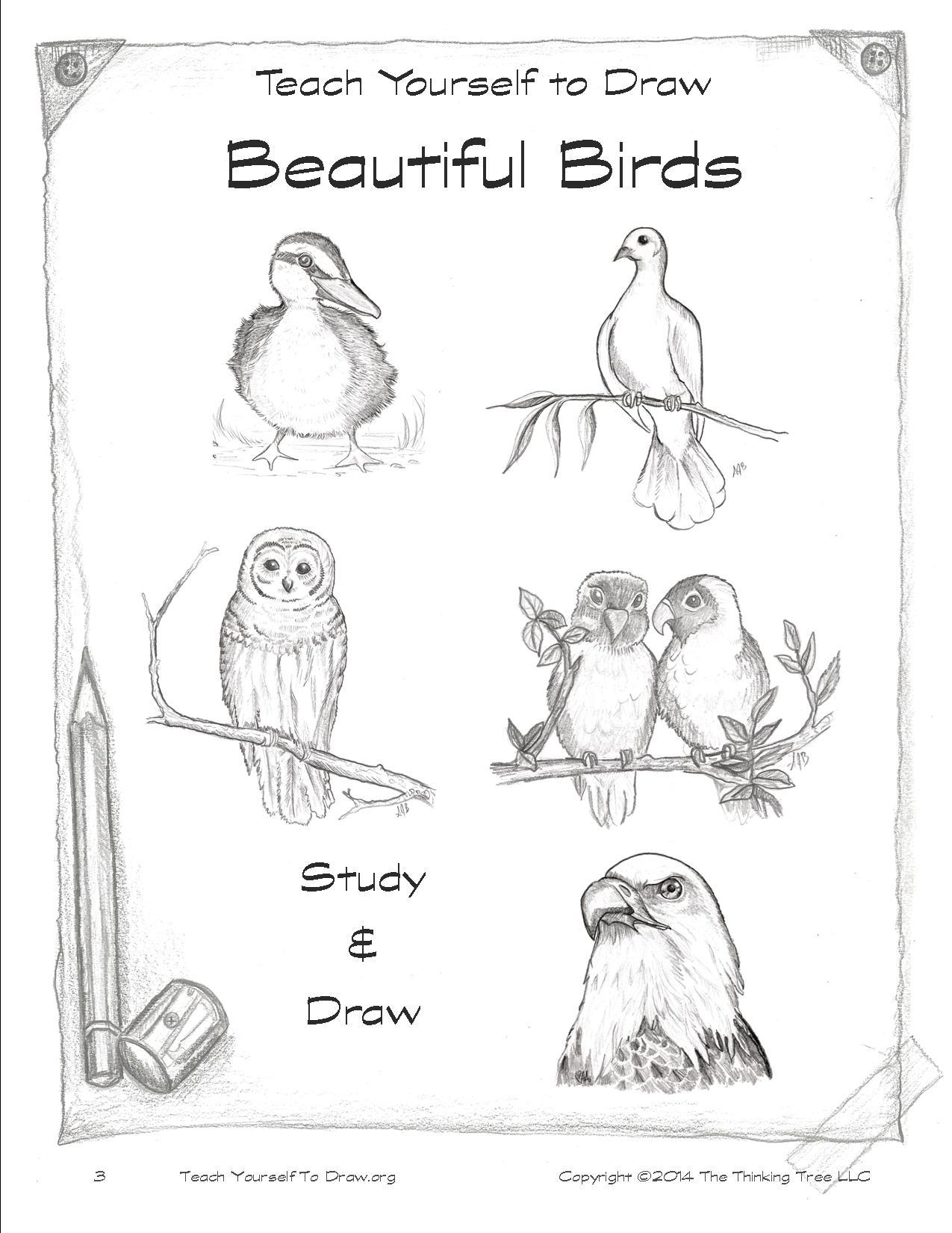 Draw Birds page 3.jpg