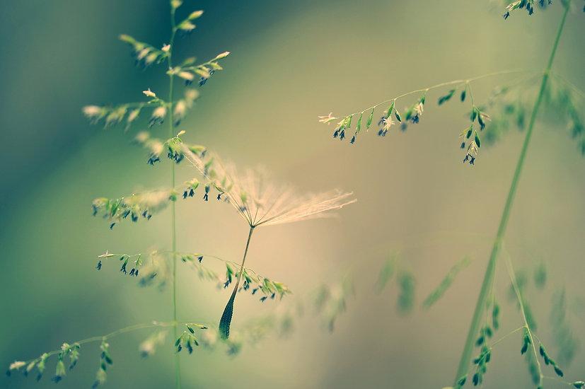 nature-2978276_1920.jpg