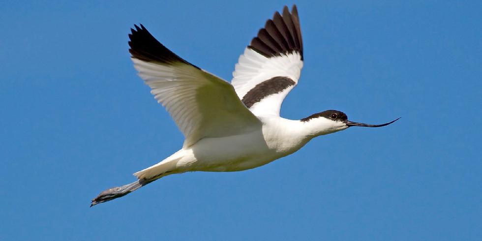 Fågelguidning