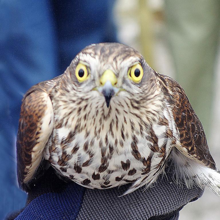 Falsterbo Birdshow 2021 - Natursnok (Ej arr av FNF)