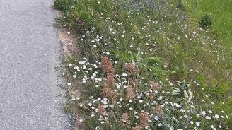 Tekniska nämnden i Vellinge kommun fortsätter att hejdlöst klippa artrika vägrenar och grönområden