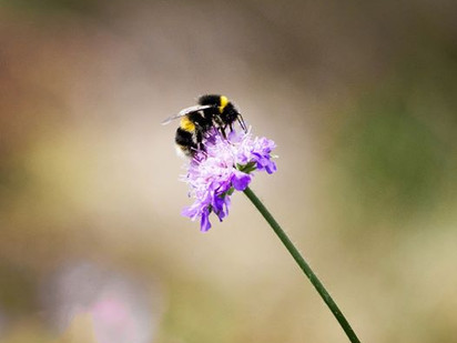 Kan Vellinge kommun bli ledande inom biologisk mångfald?