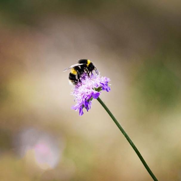 Insekternas dag med Ulf Westerberg