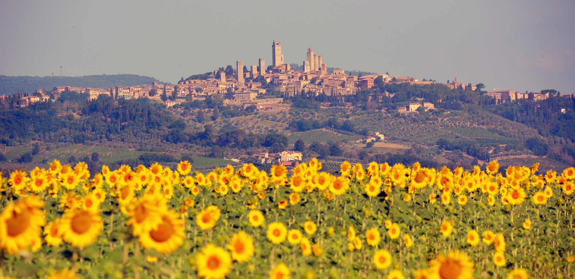 Our first winery in tasting in San Gimignano