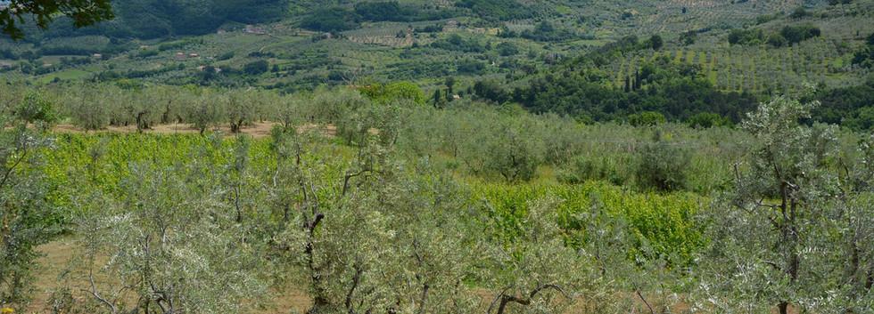 View on Carmignano