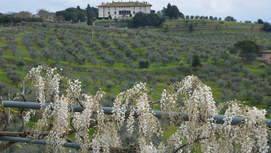 View on Artimino Medici villa