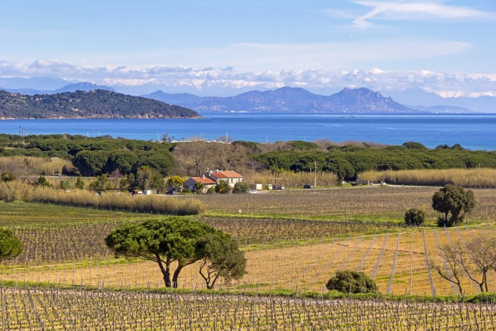 Wineries around St Tropez in Provence
