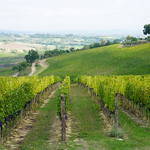 Winecountry in Montepulciano on a tour with Grape Tours