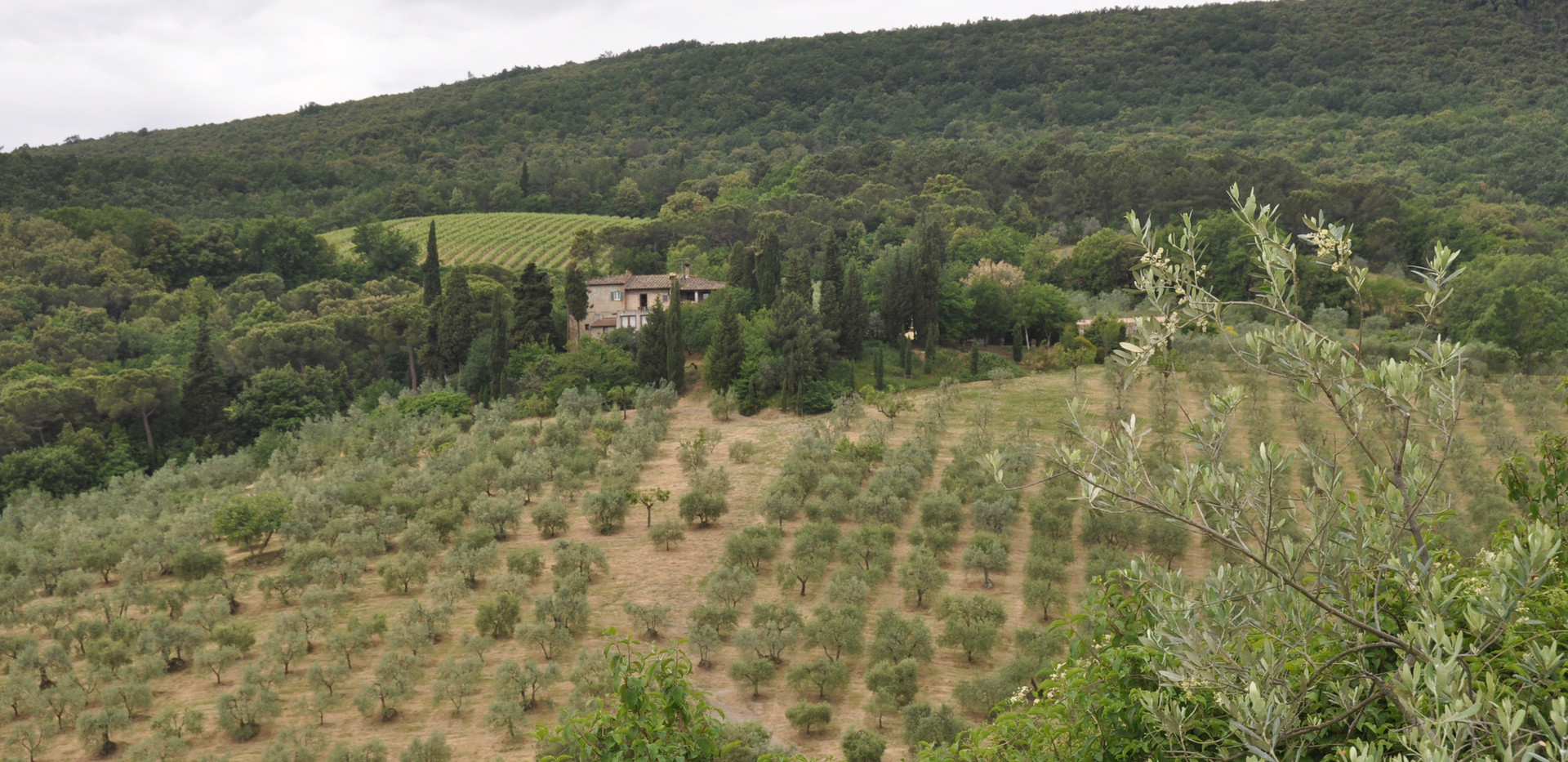 Montenidoli winery San Gimignano