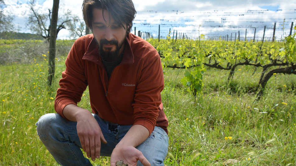Half day - wine & olive oil tour