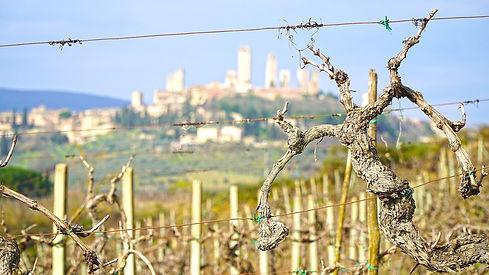 Visite de domaine en Toscane