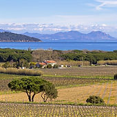 st-tropez-vineyards.jpg
