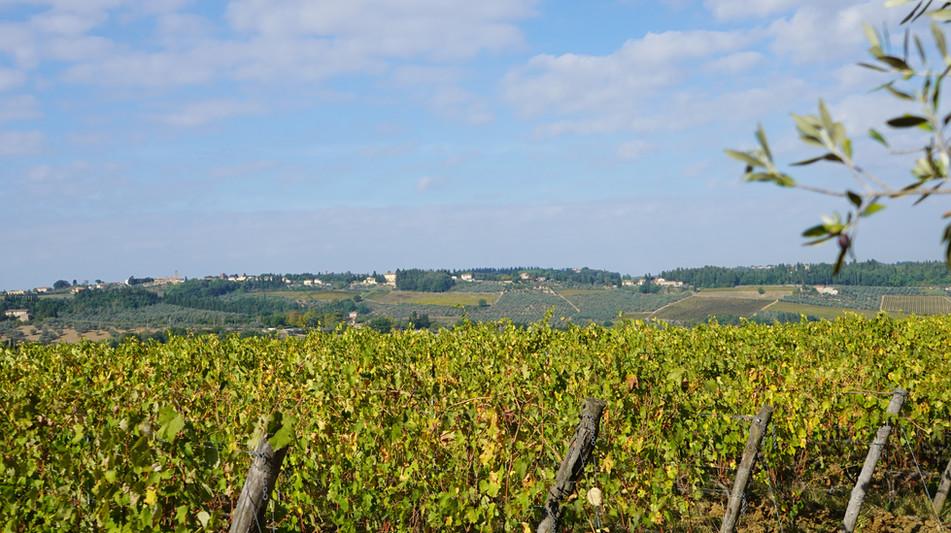 Corzano & Paterno vineyard view