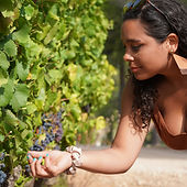 Taste grapes directly from the vine in Provence with Grape Tours