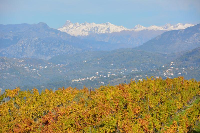 Bellet vineyards view