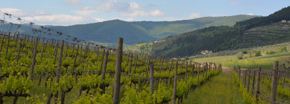 Half day - 2 wineries tour