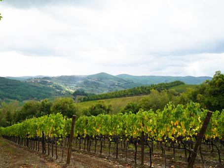 Alyson Morgan, a US winemaker in Italy