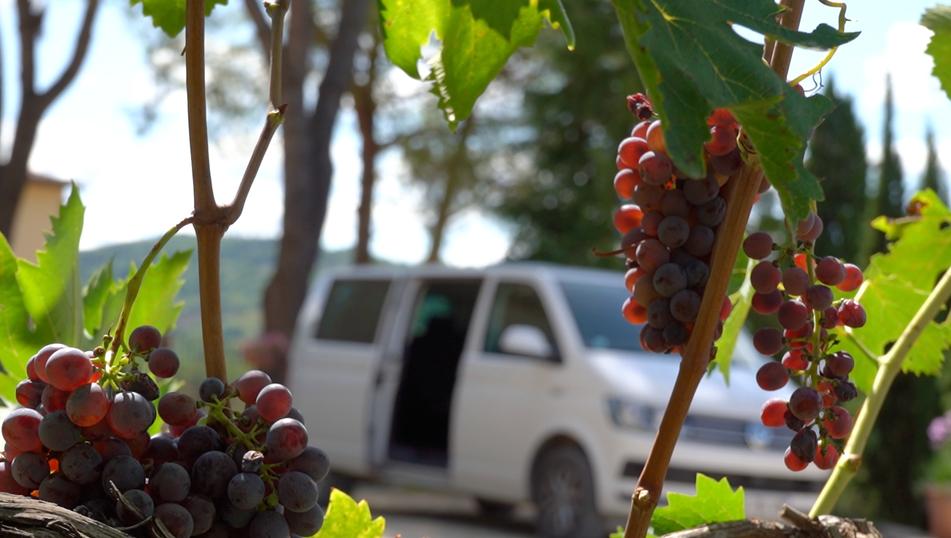 Grape Van transportation