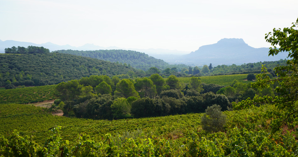 View from the first winery in Provence