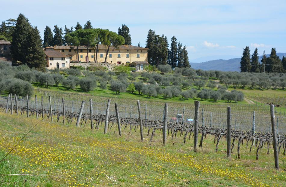 Visit 3 beautiful wineries