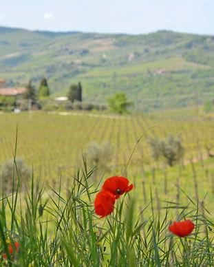 wineries - castello di amam DSC_0029.JPG