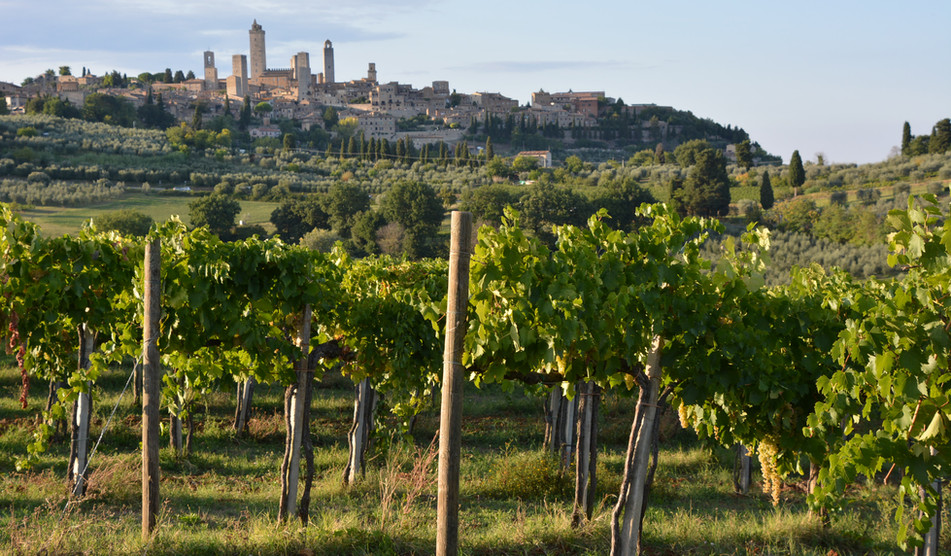 Love white wine? Tour the region of San Gimignano!