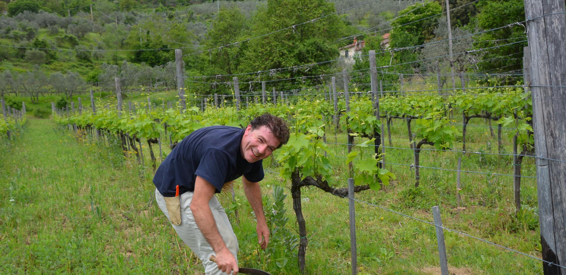 Biodynamic vineyard worked by hand