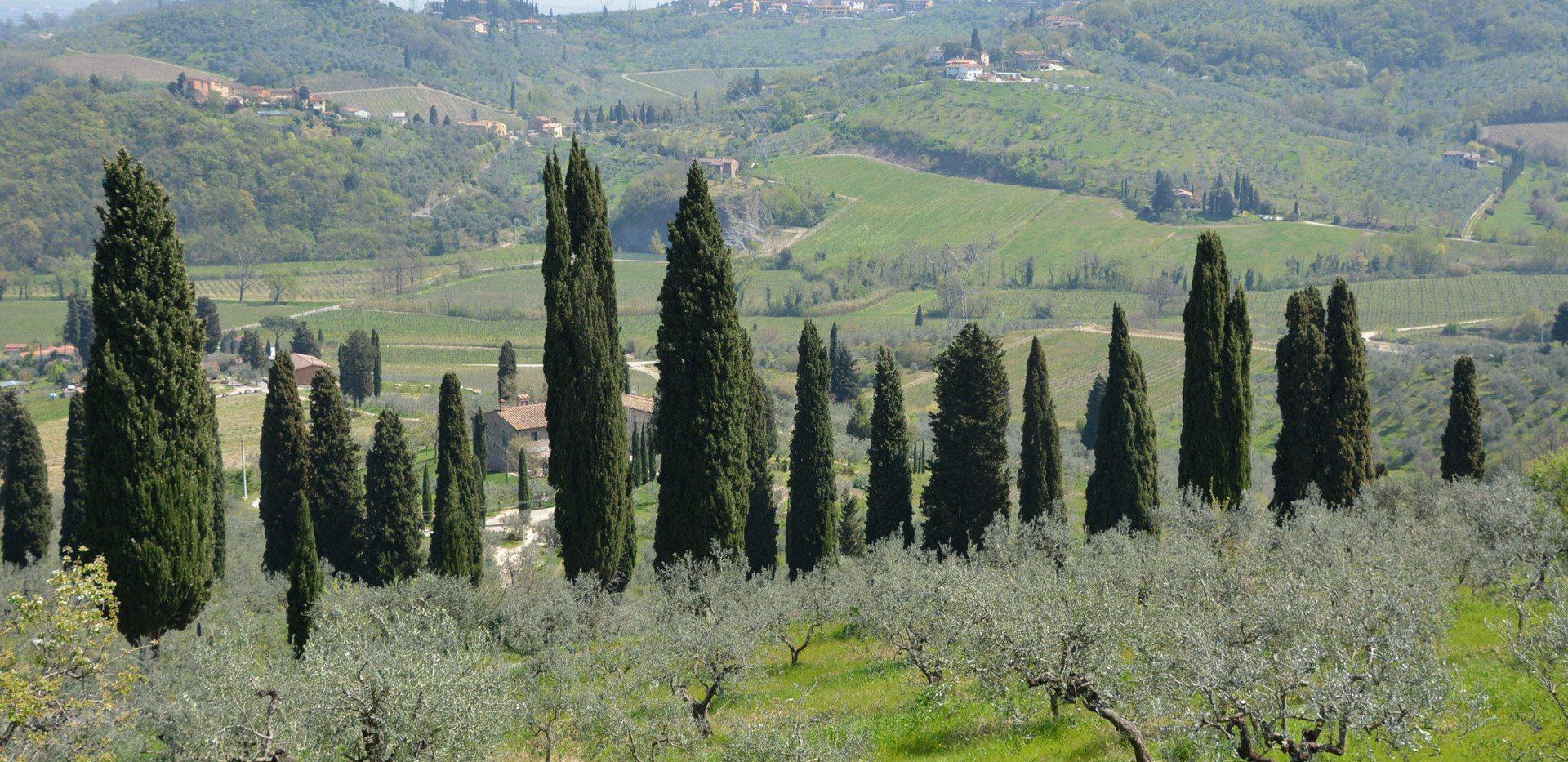 Cypress lanes towards the winery
