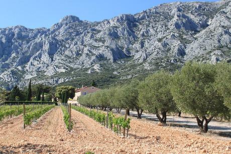vignes de Provence.jpg