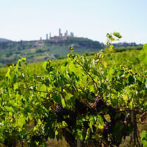 View over San Gimignano on a wine tour with Grape Tours