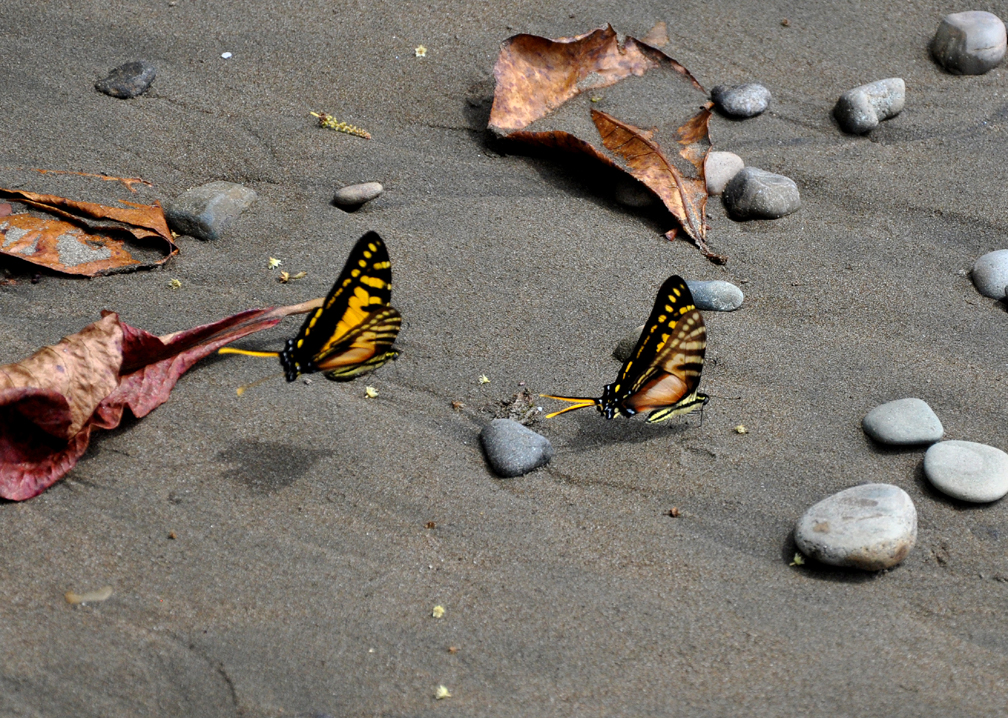 2papillons