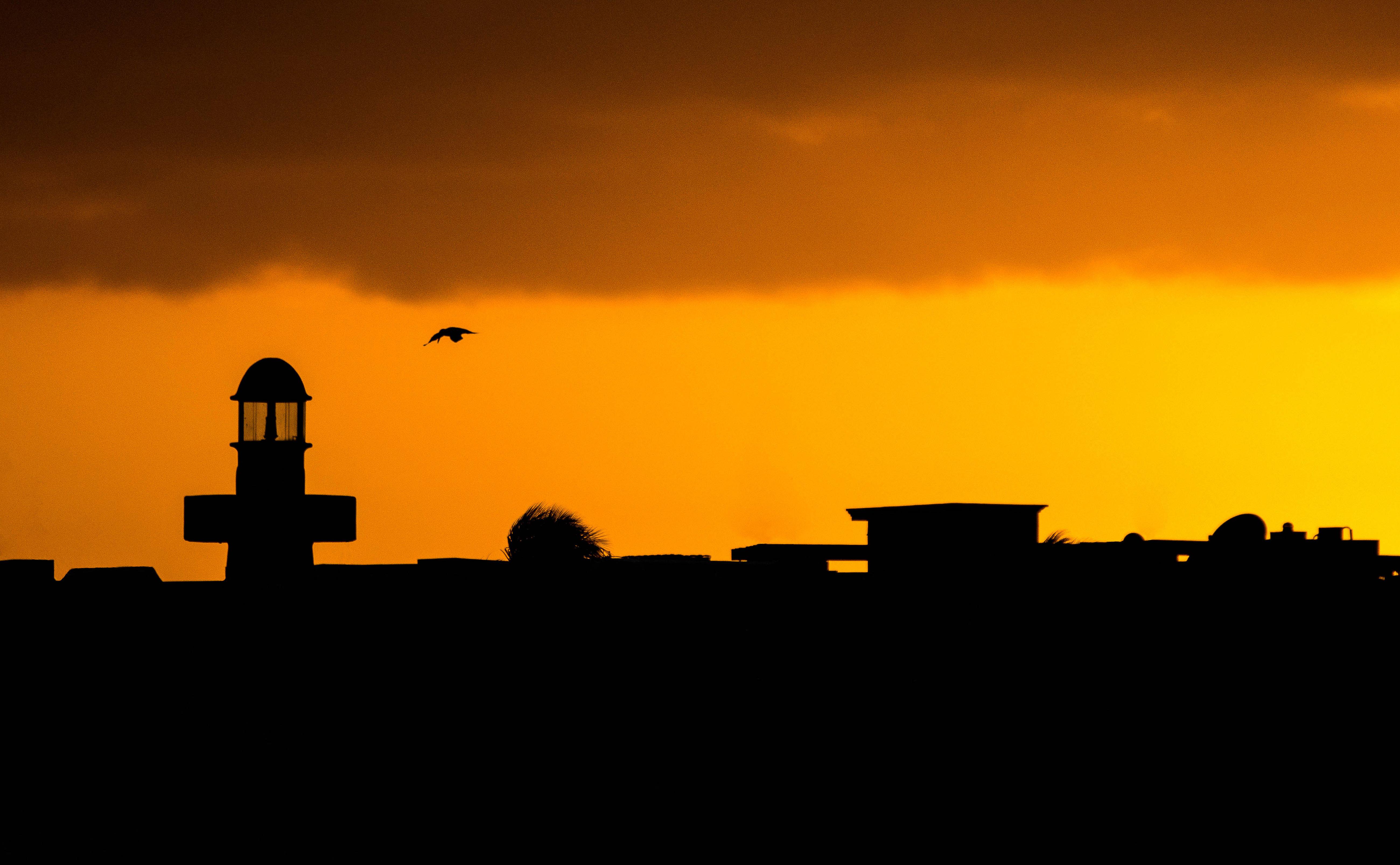 sunsetandbird