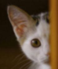 peekaboo-cat-4.jpg