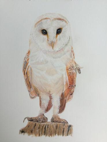 Owl Final.JPG