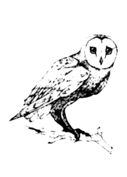 owl white.png