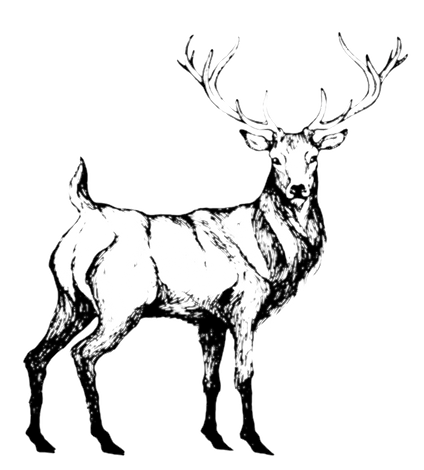 Deer White.png