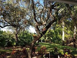 Large Oak Trees at Dixie Oak Manor