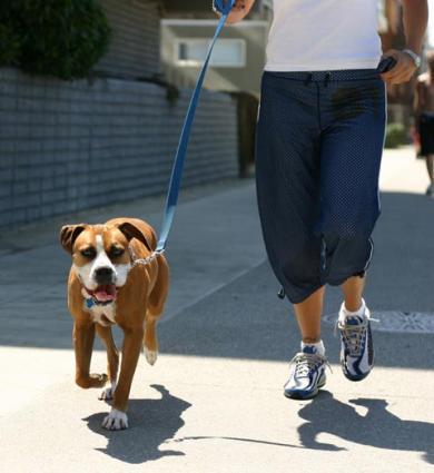 65202-390x425-Dog_Boxer.jpg