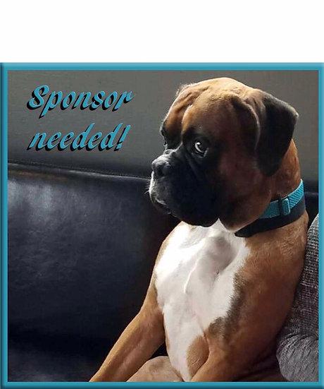 Sponsor a Rescue dog: SPAY/NEUTER