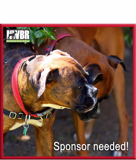 Sponsor a Rescue dog: MICROCHIP