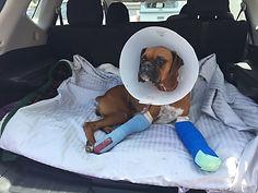 Carina post after surgery.jpg