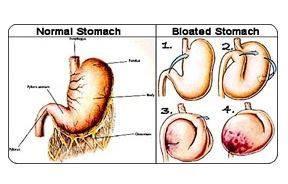bloat.jpg