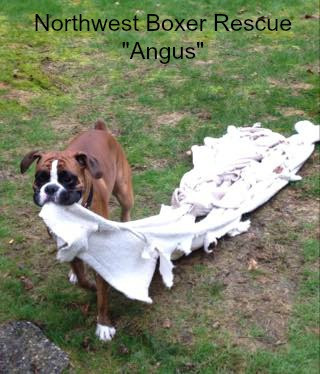 Angus.jpg