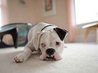 Is Your Family Moving? Tips For Moving With Your Dog