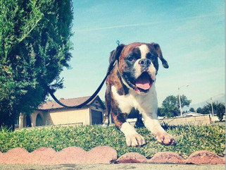 How Buying a Home Can Rescue a Dog