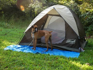 Things to Remember When Exploring the Outdoors with Your Dog this Summer