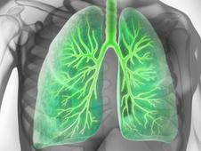 Meine Lunge