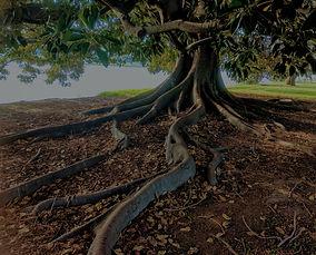 gray-trunk-green-leaf-tree-beside-body-o