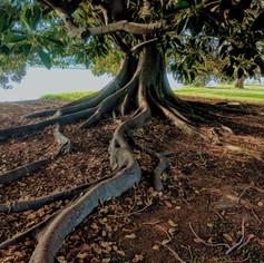 Análise de Risco de Queda de Árvore